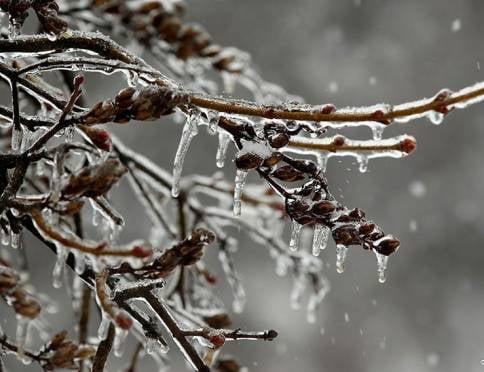 После дождей в Мордовию придёт мороз