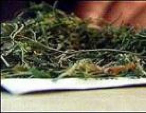 Житель Мордовии попался на хранении и выращивании марихуаны