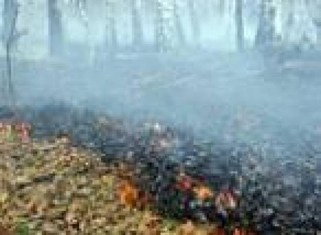 Сожженная листва может угрожать здоровью жителей Саранска