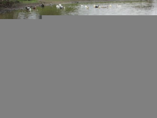 В Мордовии школьный учитель спас ребенка