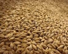 В Мордовии скоро будут подсчитывать урожай зерновых
