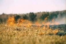 В шести районах Мордовии прогнозируют пятый класс пожароопасности