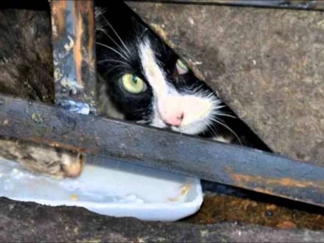 В Саранске в решение проблемы с «замурованными» кошками вмешался мэр