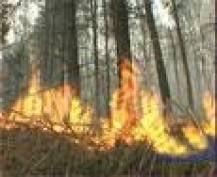 В Мордовии пятый день продолжают гореть леса Зубово-Полянского района