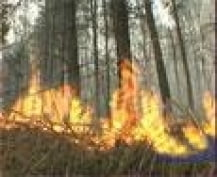 За минувшие сутки в Мордовии произошло два лесных пожара