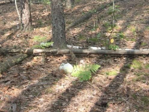В Зубово-Полянском лесу обнаружены скелетированные останки человека