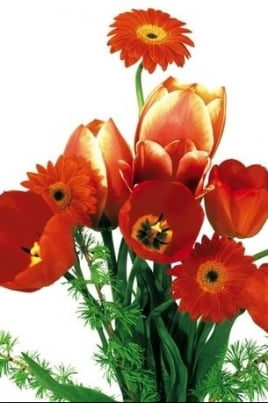 Май! Профсоюз и Весна! постер