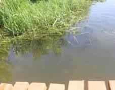 В Мордовии нашли труп упавшего в реку велосипедиста