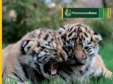 Свыше 165 тыс клиентов РСХБ приняли участие в благотворительном проекте «Амурский тигр»