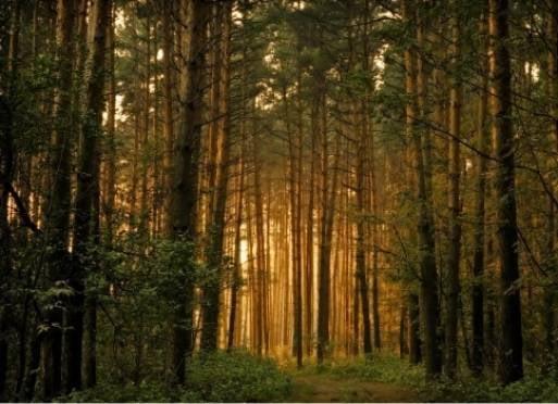 Жители Мордовии могут вернуться в тень лесов