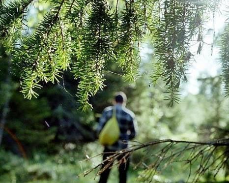 Леса районов Мордовии могут угрожать грибникам