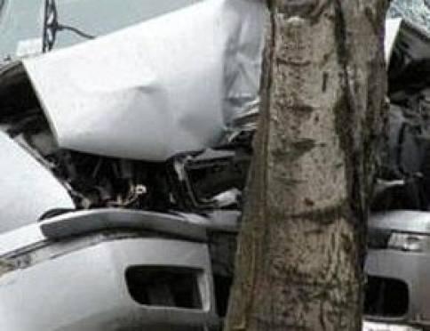 Вчера водители в Мордовии «собирали» деревья
