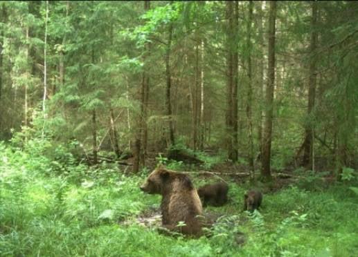 Жители Мордовии приблизятся к природе через прицел фотоловушек