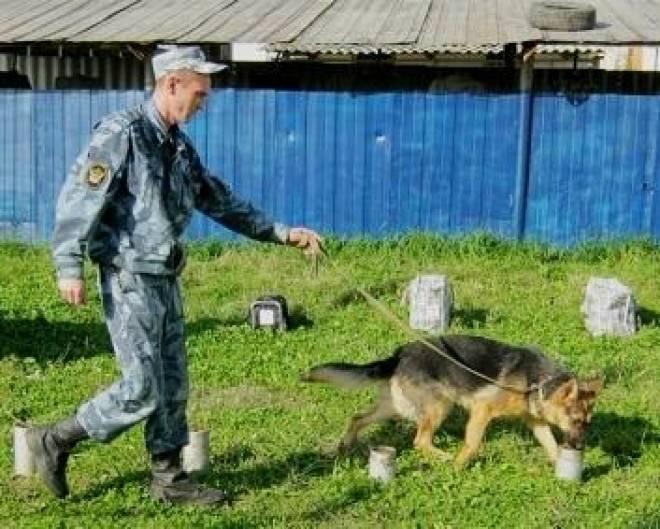 Служебных собак Мордовии воспитывают по уникальной системе