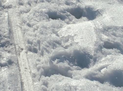 Горнолыжный сезон в Мордовии подходит к концу