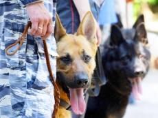 Кинологи с собаками обследуют школы Саранска