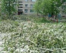 Директор домоуправления в Саранске наказан за самовольную вырубку деревьев