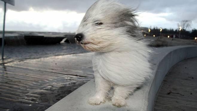 МЧС предупреждает жителей Мордовии о возможном ударе стихии