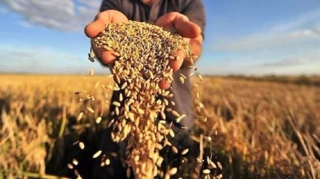 Аграрии Мордовии кормят республику и соседей