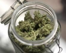 Заключенному Дубравлага Мордовии прислали 1 кг марихуаночая
