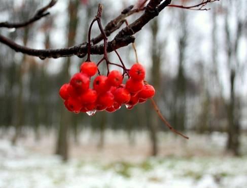 В Мордовии немного потеплеет