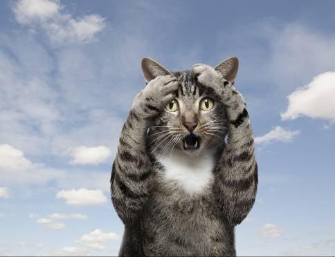 В Саранске разыскивают лжекурьера, обманувшего хозяйку породистого котёнка