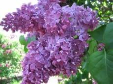 Жители Мордовии могут строить планы на майские праздники
