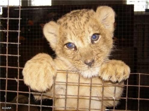 В Саранске подорожал зоопарк
