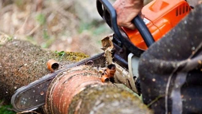 «Черный лесоруб» в Мордовии сгубил сосен на 500 тысяч рублей