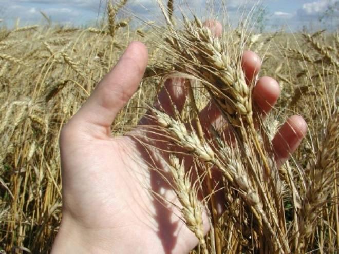 Аграрии Мордовии сделали первый шаг к амбициозному урожаю зерновых