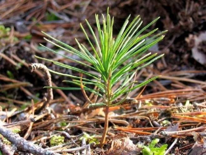 В Мордовии посадят почти 1 млн гектар нового леса