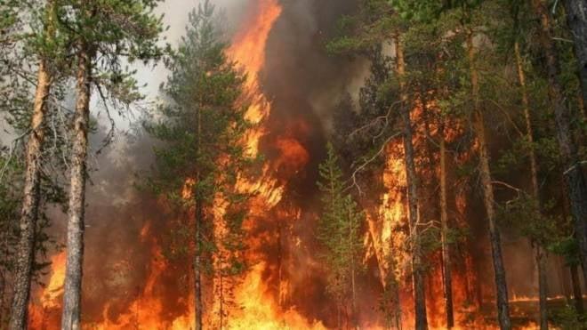 Специалисты из Гринпис научат сотрудников мордовского заповедника бороться с пожарами