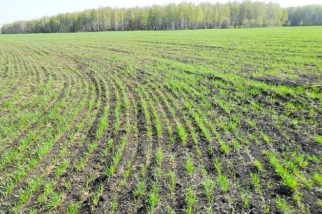 В Мордовии механик получил смертельную травму на сельхозработах