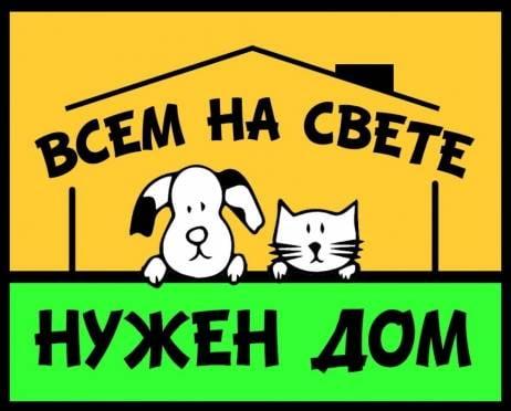 В Саранске бездомным животным помогут попасть в хорошие руки