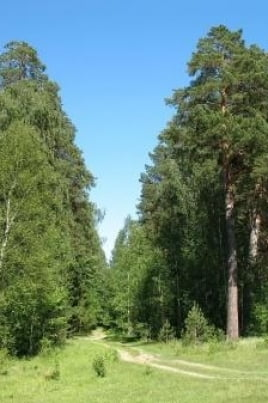 Природа Мордовского заповедника постер