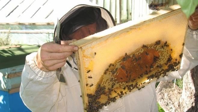 Пчеловоды из мордовской колонии собрали свыше 1 000 кг меда