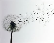 МЧС Мордовии предупреждает о сильном ветре