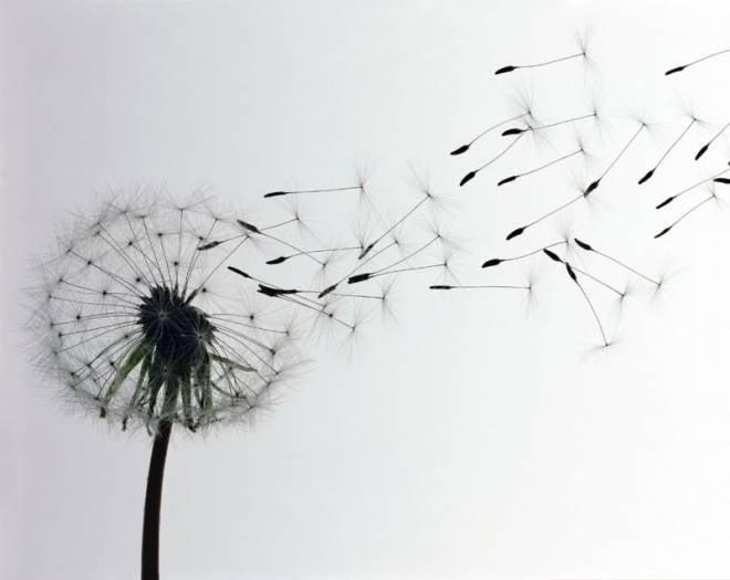 МЧС Мордовии: ожидается сильный ветер