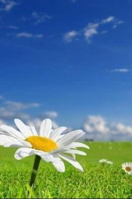 Весны приятные мгновенья! постер