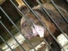 Обитателям саранского зоопарка обеспечен зимний рацион
