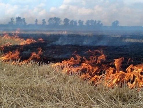 В Мордовии горит стерня