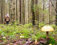 В Мордовии пенсионерка ушла за грибами и заблудилась