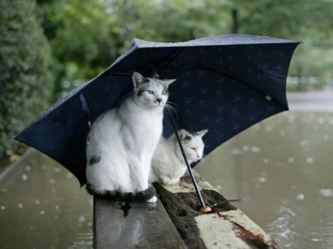 Жителям Мордовии стоит вспомнить о зонтах