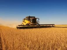 Аграрии Мордовии пожинают плоды и подсчитывают урожайность