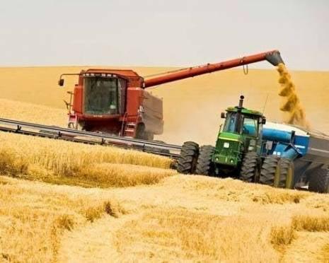Сбор зерновых в Мордовии пройдет по принципу «из под комбайна»