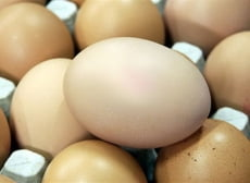 Мордовии не грозит дефицит молока и яиц
