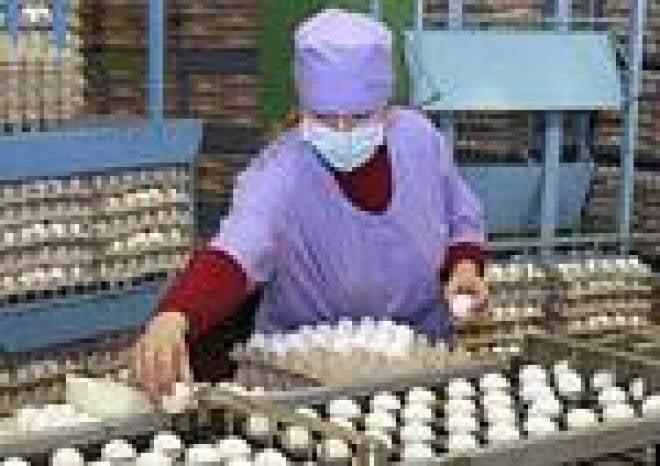 В текущем году в Мордовии планируется произвести не менее миллиарда яиц