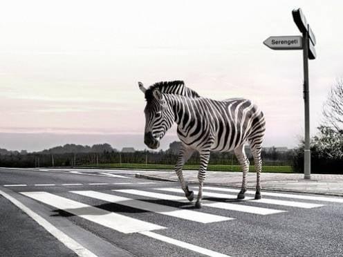 В Саранске под особый контроль возьмут нерегулируемые «зебры»