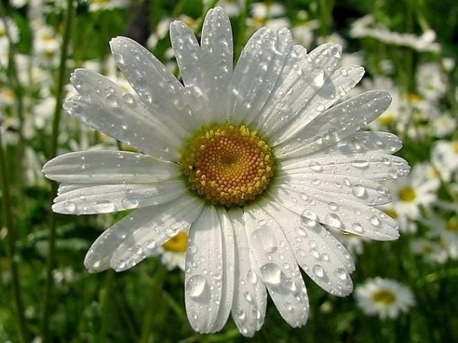 Мордовию ждут дождливые выходные