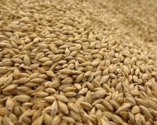В Мордовии собран 1 млн 200 тысяч тонн зерновых